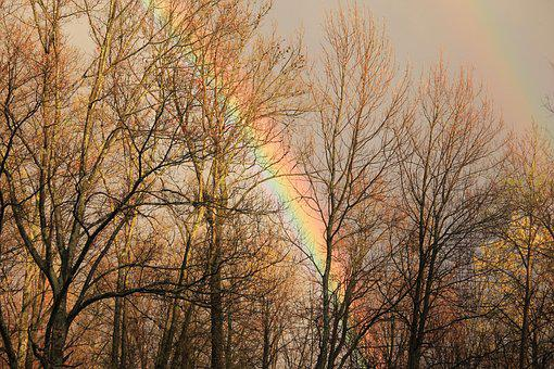 Fall, Rainbow, Nature, Autumn, Trees, Natural, Outdoor