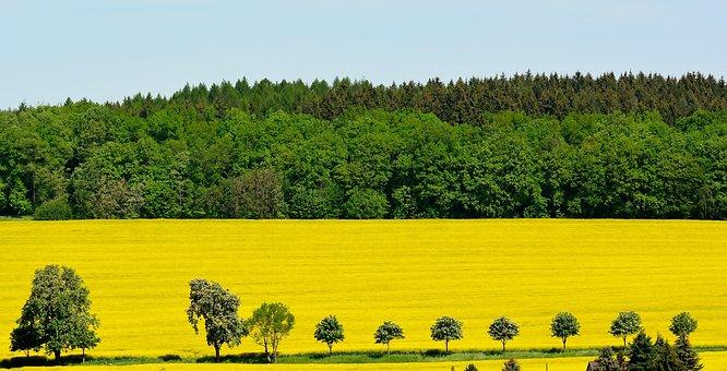 Nature, Oilseed Rape, Field, Agriculture, Wide