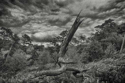 Black And White, Landscape, Dead Tree, Forest, Dramatic