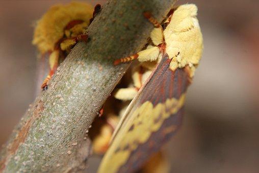 Mariposa, Mating, Casal, Nature, Wings, Insect, British