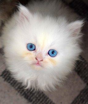 Kitten, Pussy, Cat, A Little, Jam, Cute, A Pet