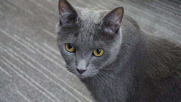 Cat, A Brooks, Cute, Kitten, Meow