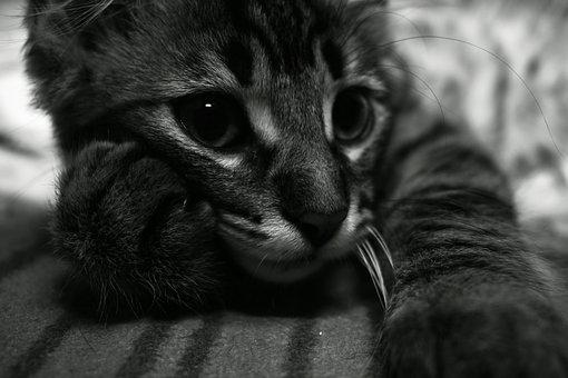 Kitten, Thoughtful, Expression, Curious, Fur, Other