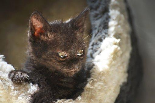 Cat, Cute, Portrait, Mammal, Pet, Animal, Kitten, Eye