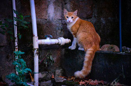 Cat, Feline, Animals, Skin, Mammals, Hairy, Fluffy