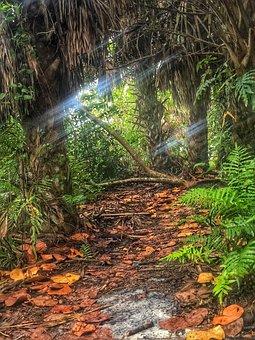 Florida, Hammock, Nature, Landscape, Usa, Green, Plant