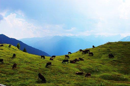 Cow, Mountains, Pasture, Landscape, Alpine, Meadow
