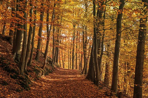 Autumn Forest, Nature, Golden, Fall Leaves, Autumn