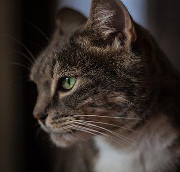 Cat, Stare, Animal, Pet, Cute, Kitty, Feline, Staring