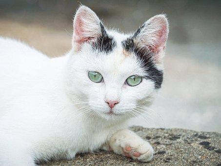 Cat, Eyes, Pet, Animal, Portrait, View, Face, Kitten