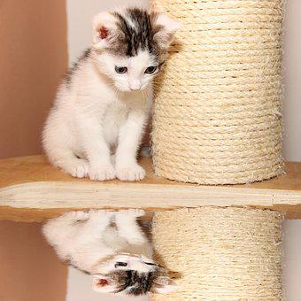 Cat, Small, Young, Mirroring, Kitten, Cute, Pet, Animal