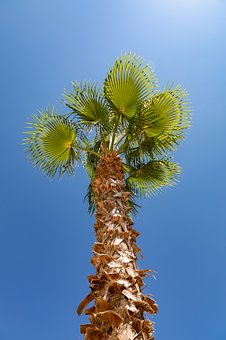 Palm Tree, Summer, Green, Brown, Blue, Holiday