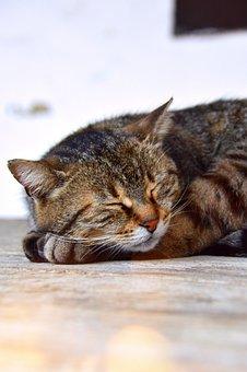 Cat, Sleep, Tabby, Kitten, Cute, Animal, Pets, Fur