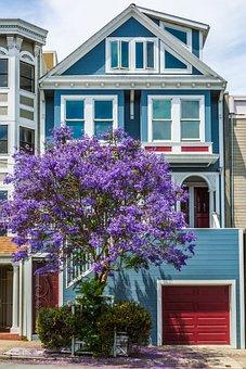 Tree, San Francisco, House, Jacaranda, Architecture