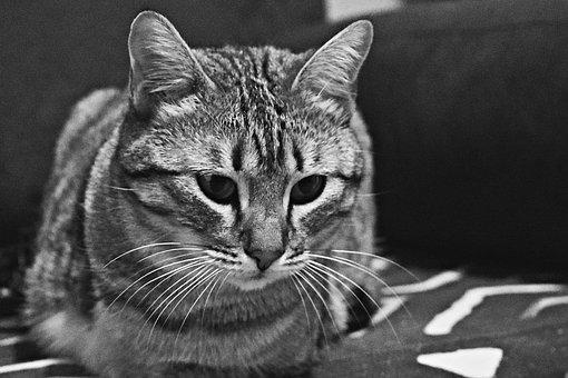 Cat, White, Angora, Turkish, Cafe, Room, Cute, Animal