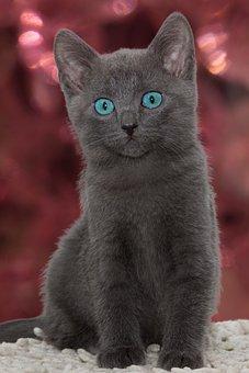 Cat, Small, Young, Grey, Kitten, Cute, Pet, Charming