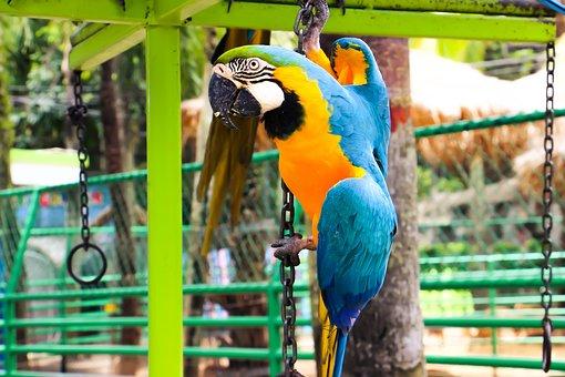Parrot, Birds Of Special Outlet, Glass, Benjawan