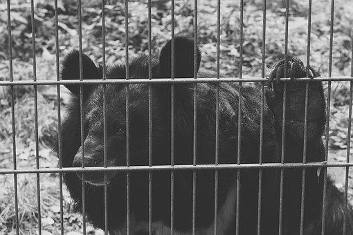 Bear, Black, Captivity, Sad, Black And White, Animals