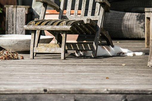 Cat, Chair, Deck Chair, Lucky Cat, Rest, Sleep, Hide