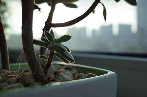Potted Plant, Flower, Plants, Veranda, Fleshy In This