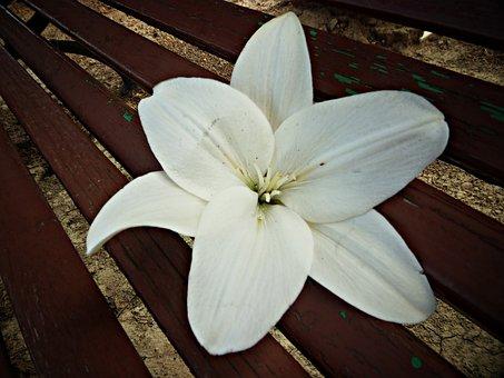 Delirium, White, Flower, Flowers, Pistil, Wood