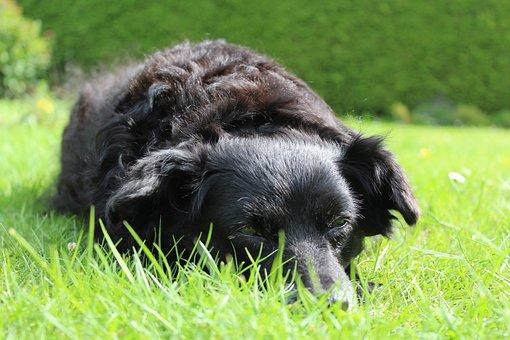 Dog, Black, Animal, Hybrid, Lying, Lazy, Summer, Out