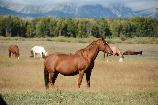 Horse, Mountains, Landscape, Beauty, Colorful, Wyoming