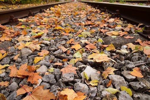 Autumn, Leaves, Leaves In The Autumn, Fall Foliage