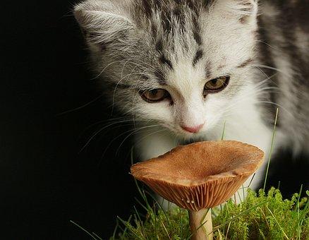 Cat, Playful, Cute, Sweet, Domestic Cat, Persians