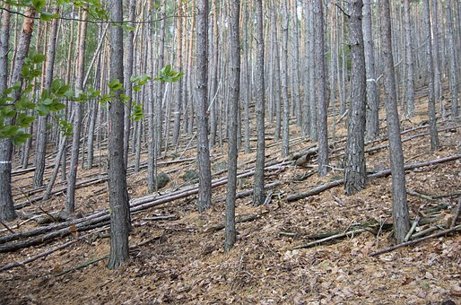 Palatinate Forest, Forest, Rhineland Palatinate, Leaf