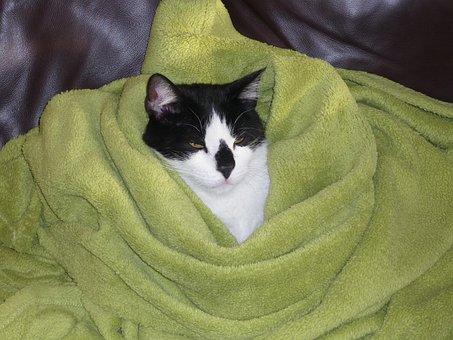 Cat, Pet, Animal, Funny, Domestic Cat, Covered, Sleep