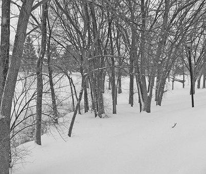 Trees, Snow, Christmas, Xmas, Winter, Season, Cold