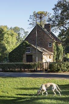 Cottage, Landscape, Dog, Nature, Summer, Sky