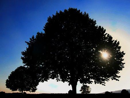 Sun, Setting, Sunset, Atmosphere, Mood, Evening, Grass