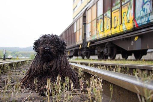 Dog, Railway, Train, Railway Station, Track, Seemed