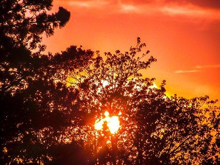 Tree, Bush, Landscape, Nature, Sunset, Sky, Clouds