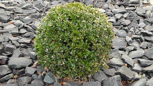Bush, Plant, Periwinkle, Trees, Blatter, Green, Nature