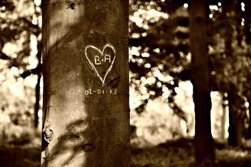 Valentine, Heart, Carving, Tree, Heart-carved-in-tree
