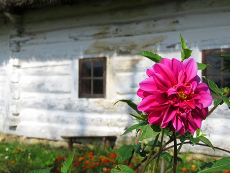 Mallow, Flower, Old Cottage, Garden, Window, Village