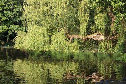 Pasture, Trees, Mirroring, Lake, Water, Nature