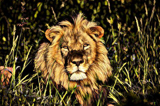 Lion, Africa, Namibia, Botswana, Big Cat, Animal World