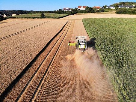 Harvest, Farmers, Combine Harvester, Barley