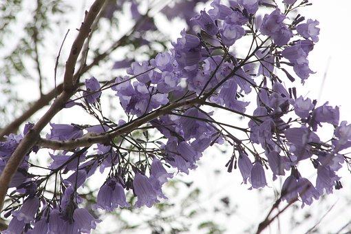 Kerkyra, Corfu, Corfu Town, Greece, Blue, Flower