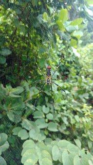 Spider, Big Spider, Nature, Rainy Time, Green Plants