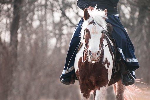 Horse, Pony, Lewitzer, Pinto, Rock, Baroque, Western