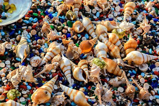 India, Indian Ocean, Shells, Sea, Jewelry, Creatures
