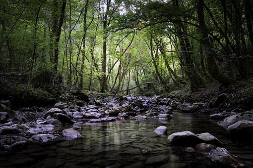 Stream, Torrent, Water, Landscape, Nature, Jungle