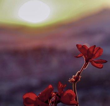 Sun, Summer, Plant, Yellow, Blossom, Seeds, Sunflower