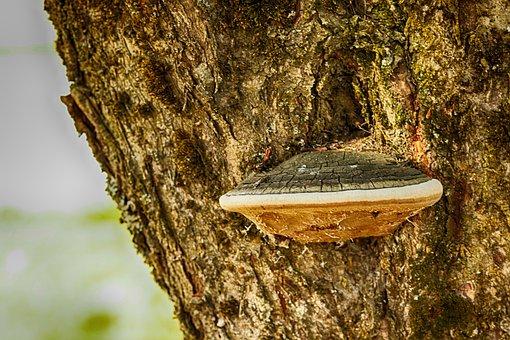 Wood, Mushroom, Tree, Nature
