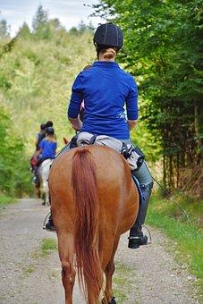 Horse, Reiter, Ride, Equestrian, Rural, Animals, Mammal